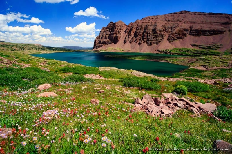 Wildflowers at Upper Red Castle Lake