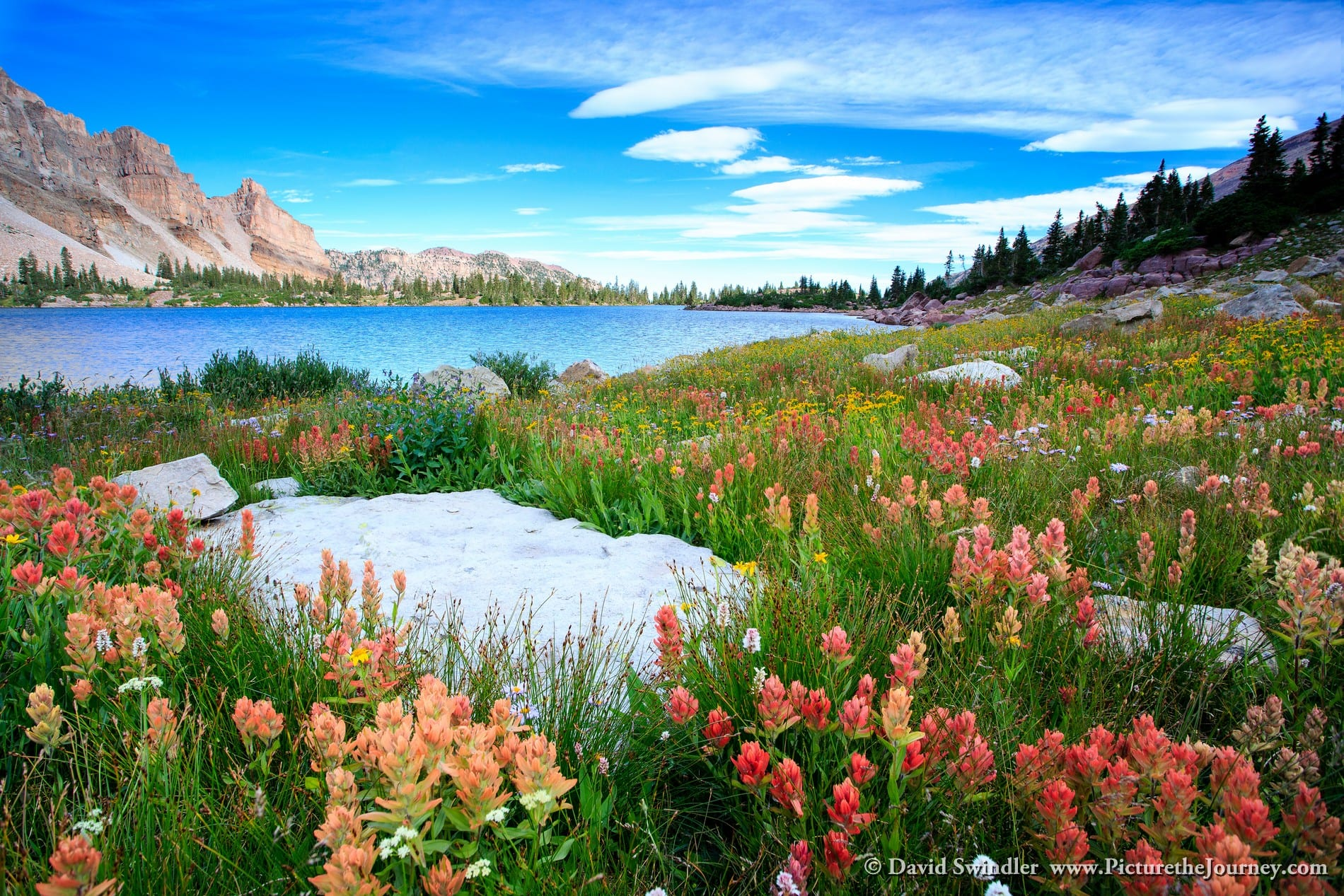 Amethyst Lake Wildflowers 2
