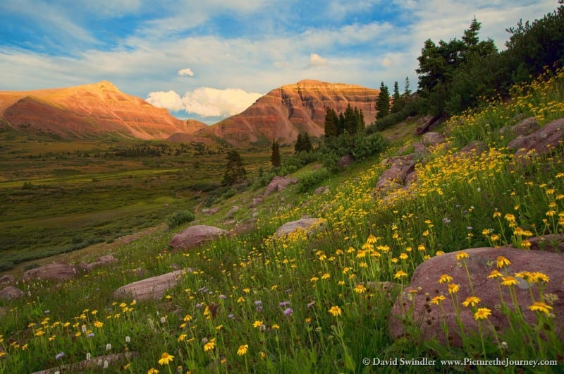 Henry's Fork with Wildflowers