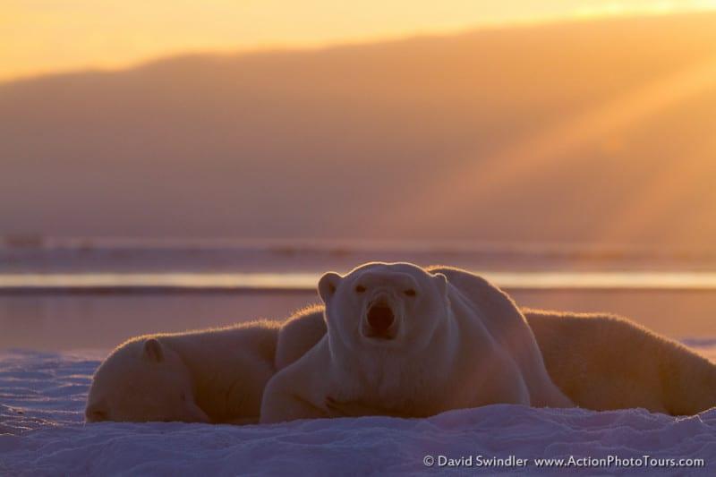 Sunny Bears