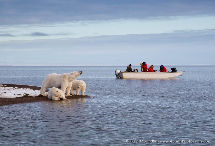 Polar Bear-51