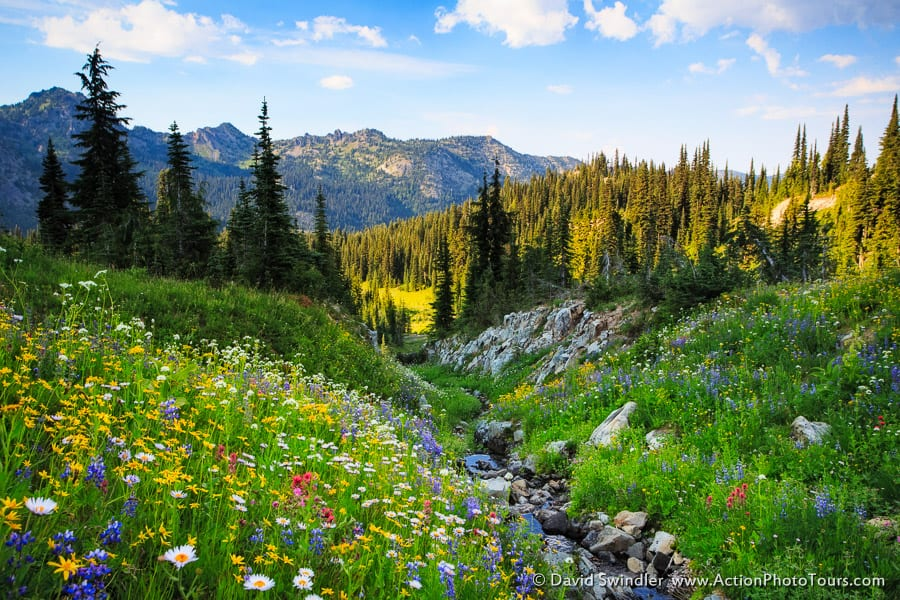 Naches Pass Flowers