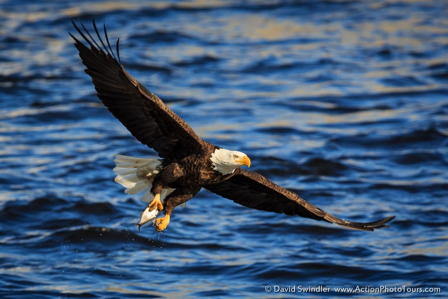 Amazing Pictures Of Eagles