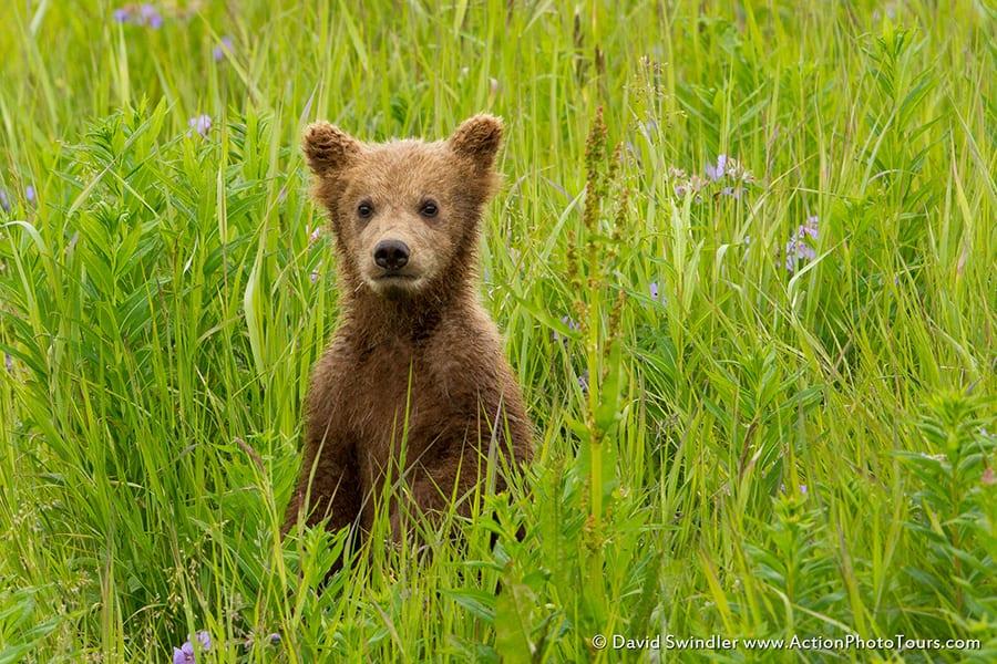 Spring Cub
