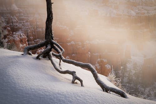 Bryce Canyon Tree Snow Winter In The Desert Photo Workshop