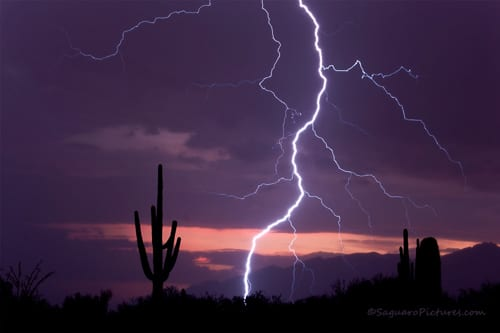 Storms and Saguaros Workshop