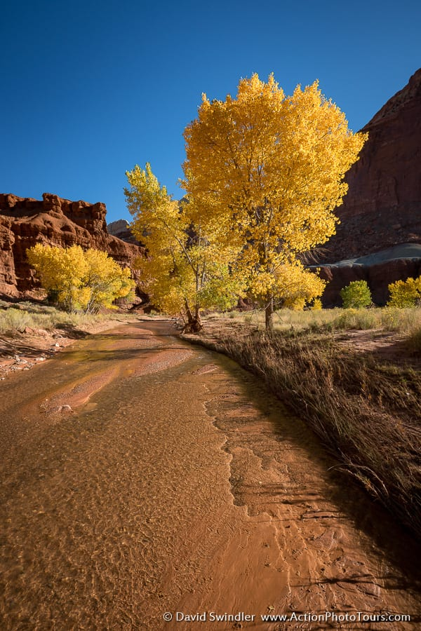 Capitol Reef Fall Color