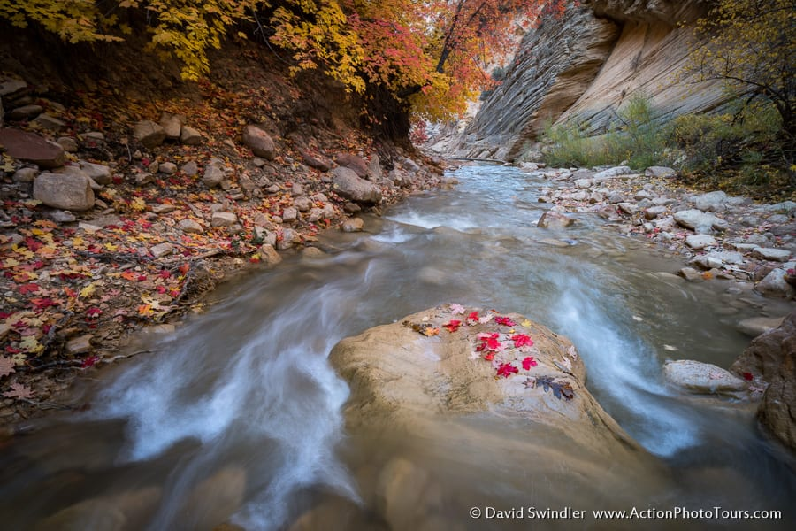 Zion Narrows Fall Color in Southern Utah