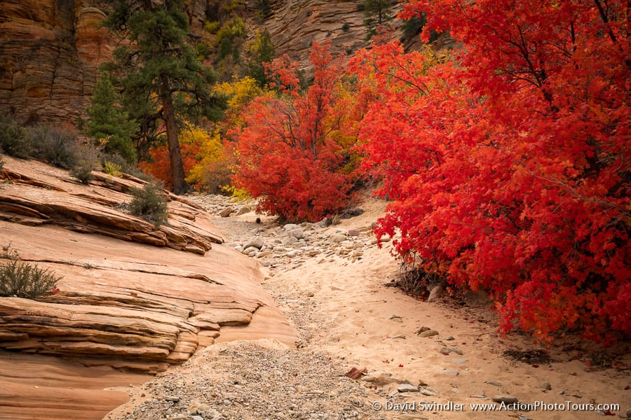 East Zion Fall Colors in Southern Utah