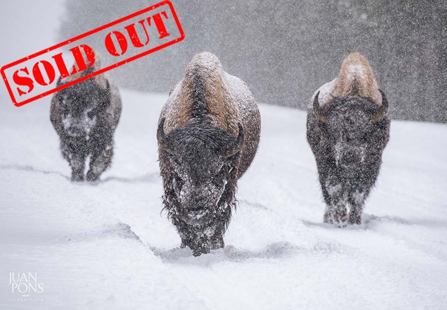20170207 sold out-