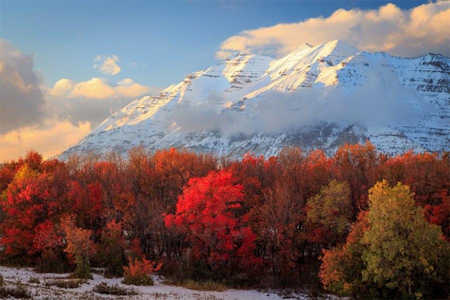 Timp fall snowstorm