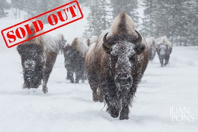 Yellowstone Winter Photo Workshop Sold Out