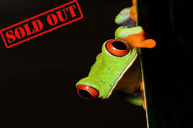 costa rica sold out