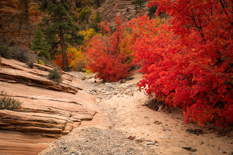 Southern Utah Fall Colors Photography Workshop Autumn Zion