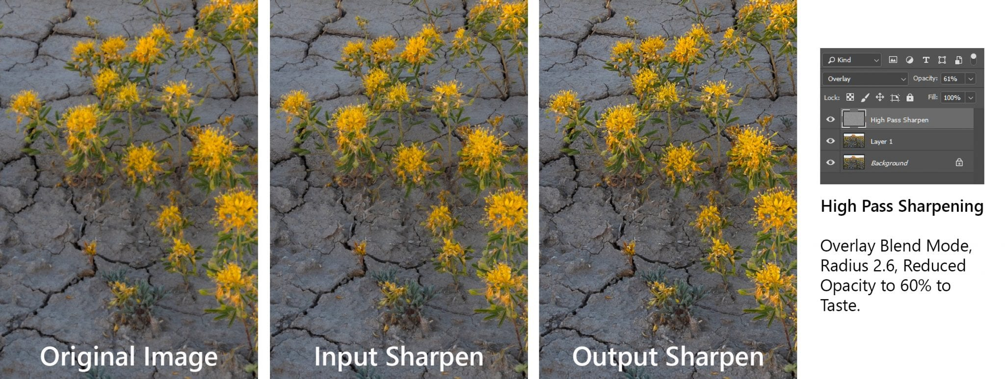 Original, Input, and Output Sharpening Comparison Using High Pass Filter in Photoshop