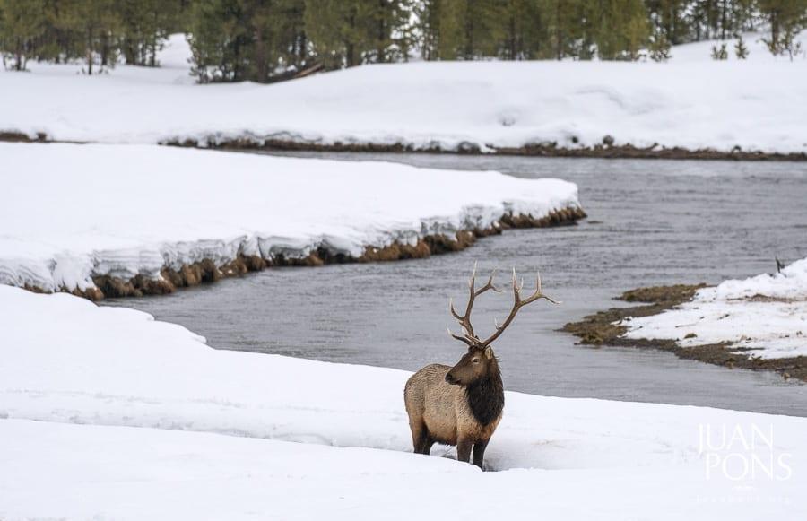Yellowstone Winter Photo Workshop