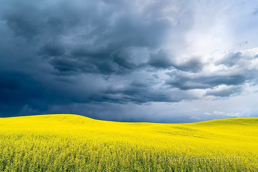 Palouse Spring Photo Workshop Canola