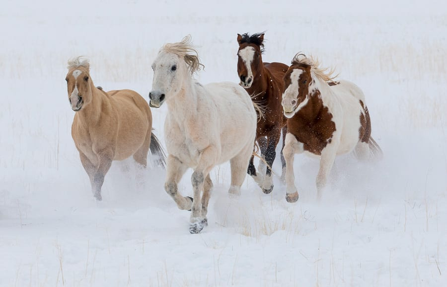 Horses running winter snow Horse Ranch Winter Photo Workshop
