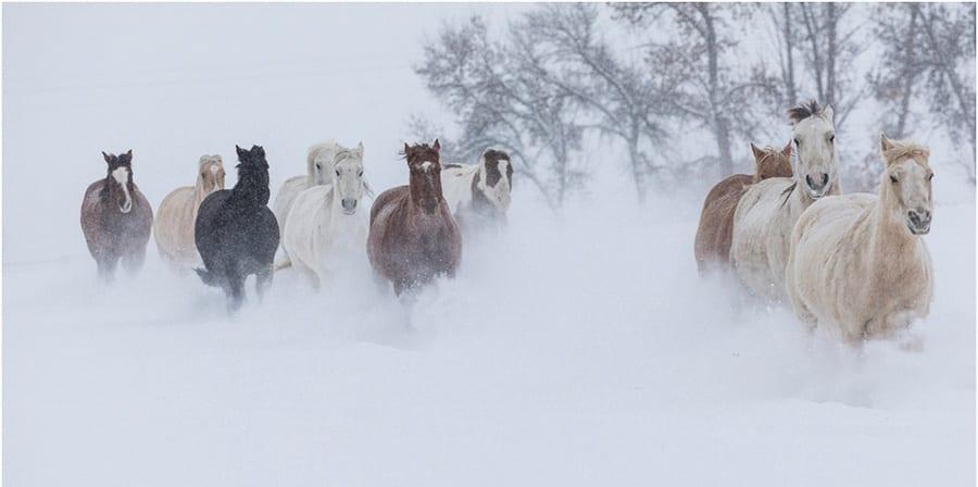 Horses running winter snow Horse Ranch Winter Photo Workshop