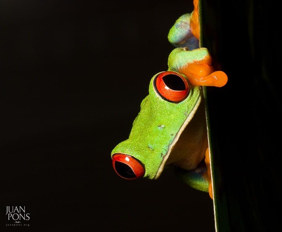 costa rica wildlife adventure photography workshop