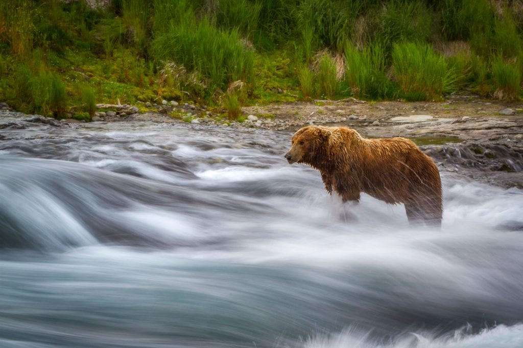 Shutter Speed for Wildlife Photography Long Exposure Bear