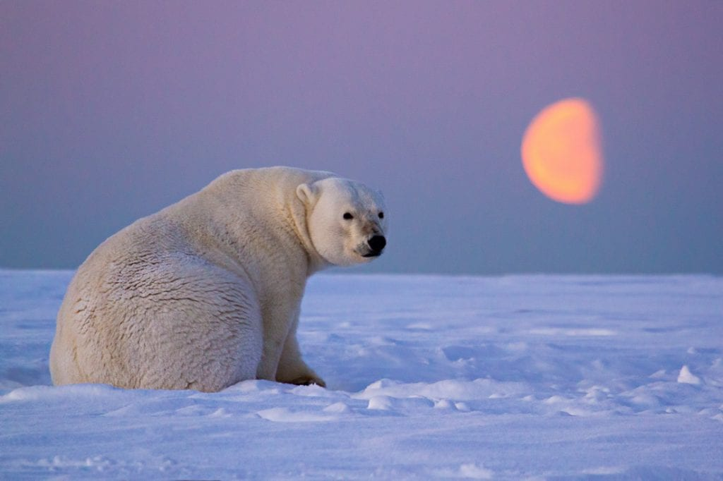 Shutter Speed for Wildlife Photography Polar Bear Moon