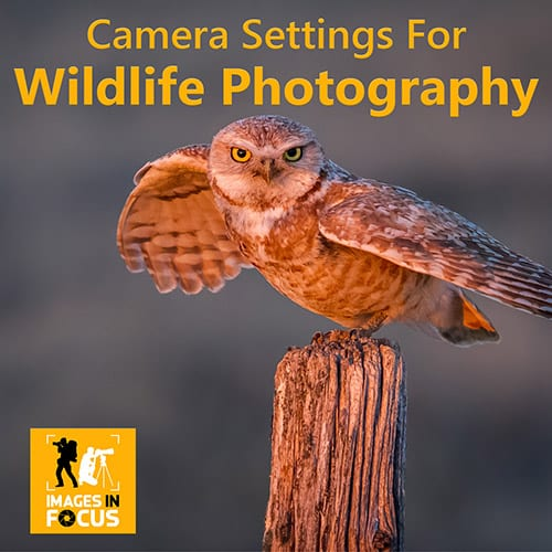 Images in Focus Camera Settings for Wildlife Photography