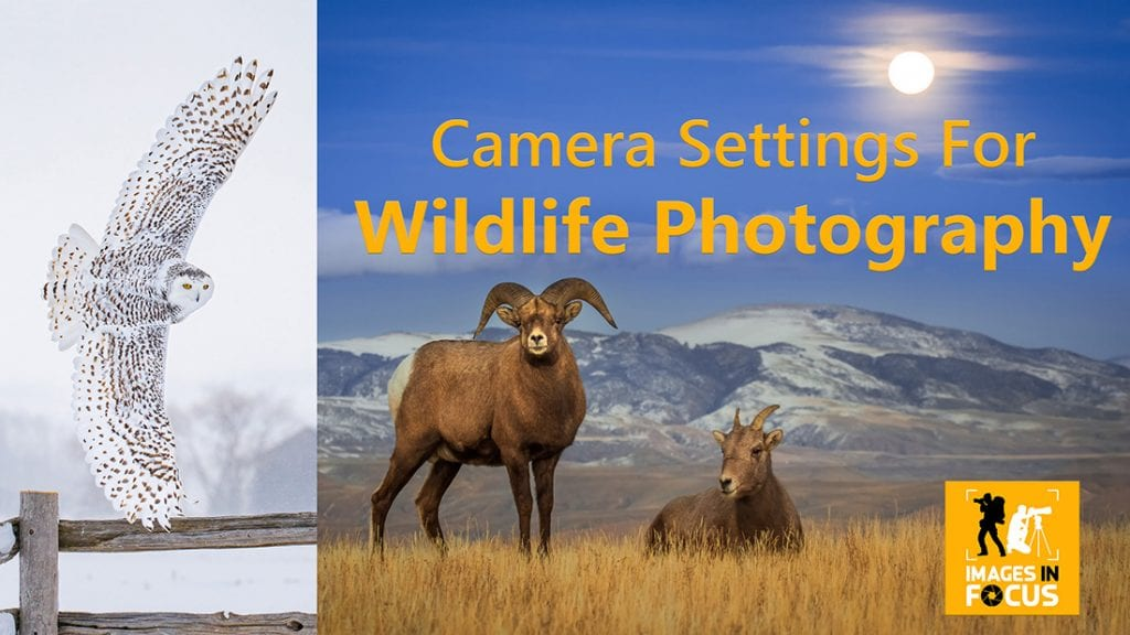 Camera Setting for Wildlife Photography