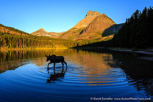 Photographing Wildlife with a Landscape Focus