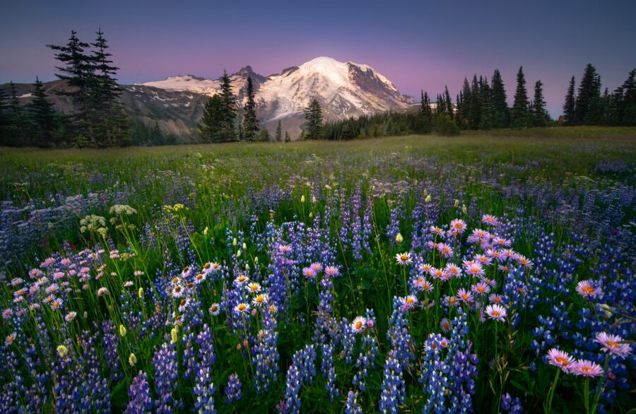 Images from the Silver Forest Trail on the Sunrise side of Mount Rainier in the Pacific Northwest Of Washington State