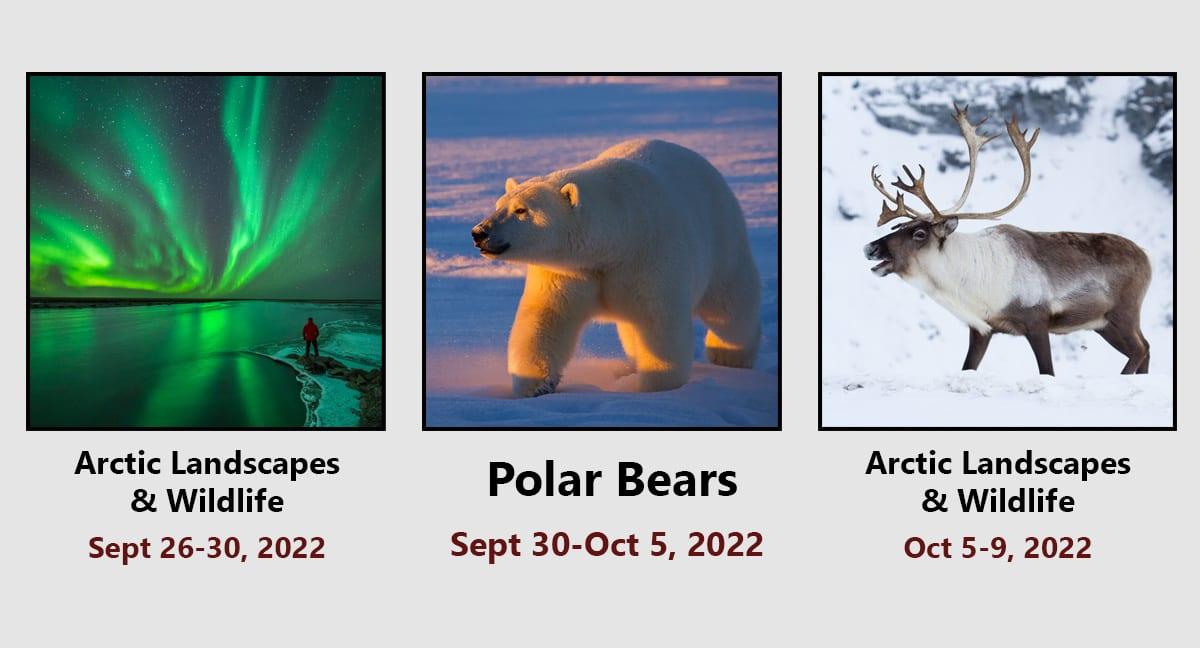 Polar Bear and Arctic Wildlife Photo Tour