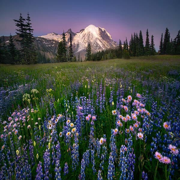 Silver Forest Trail Mt Rainier