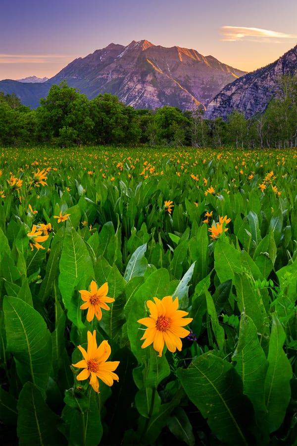 Wasatch Wildflowers Photo Workshop Northern Utah