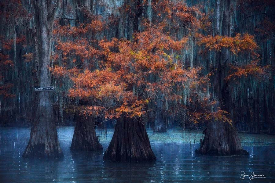 Barney Canson Cypress Swamps Photo Workshop
