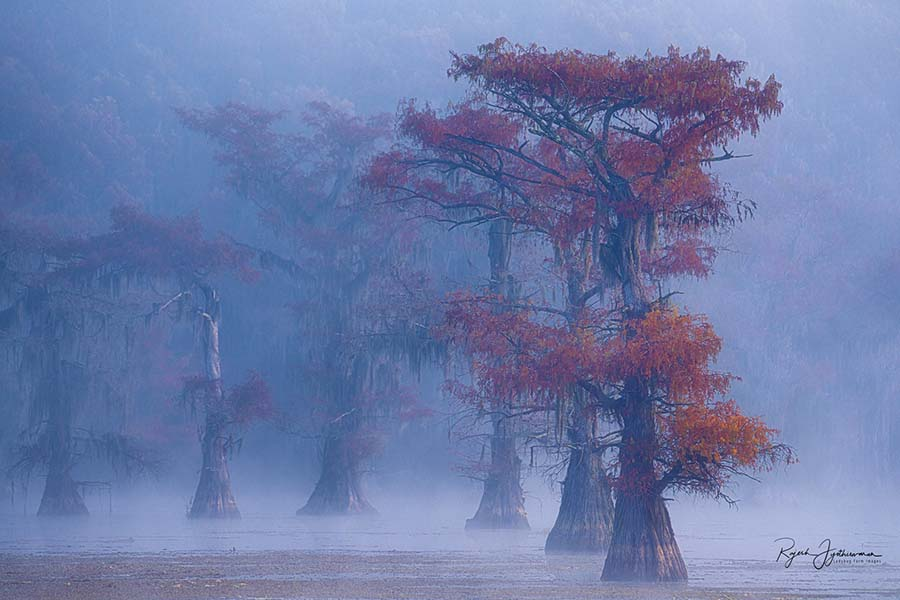 Blue Autumn Fog -Cypress Swamps Photo Workshop