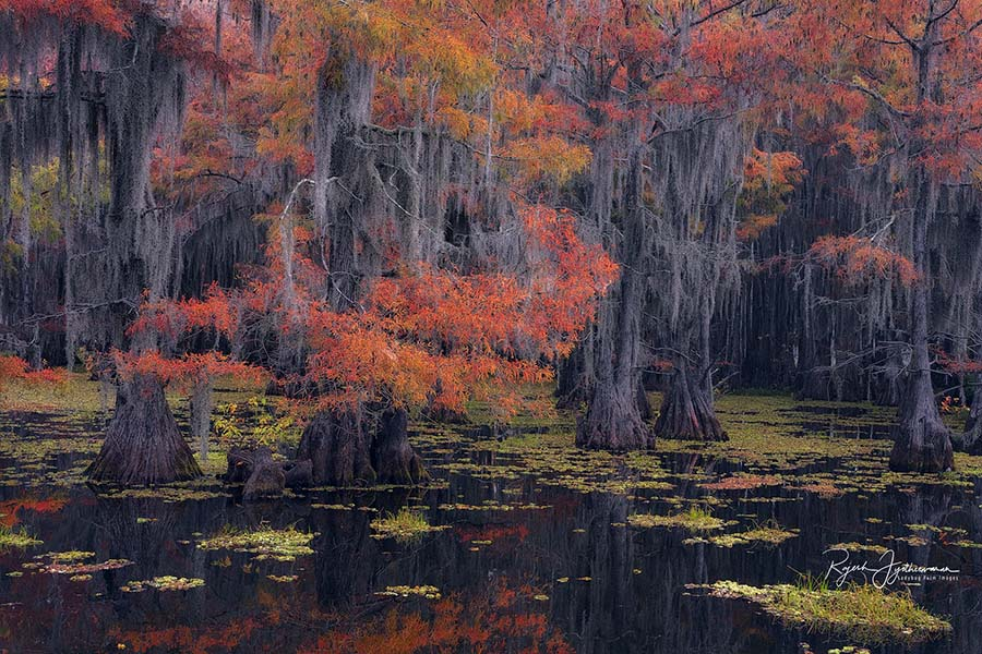 Eden - Rajesh Jyothiswaran Cypress Swamps Photo Workshop