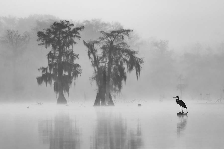 Foggy Wildlife