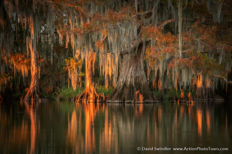 Cypress Swamps Photo Workshop Fall Autumn Texas Louisiana