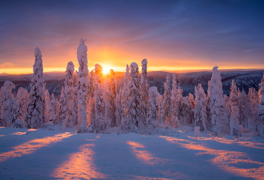 Frosted Trees Alaska Aurora Borealis Photo Workshop Rime Ice