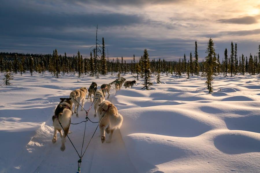 Dog Mushing Team Alaska Photo Workshop