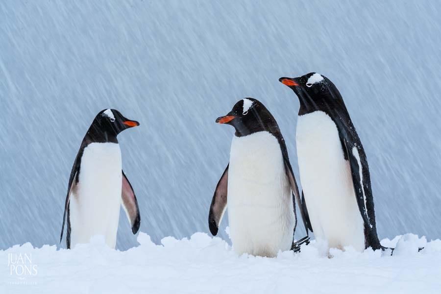 Juan Pons - Antarctica
