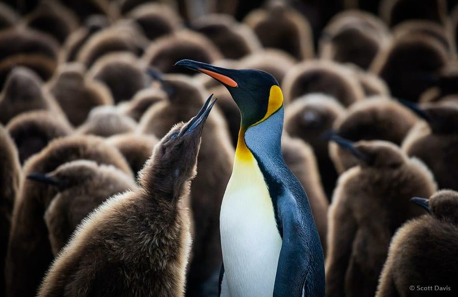Antarctica Photo Workshop Penguin Colony