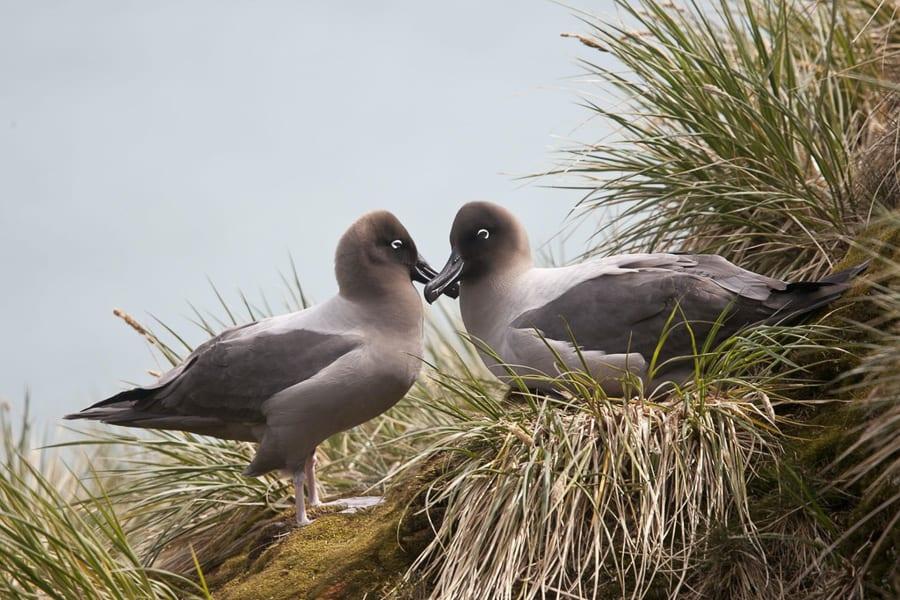Antarctica Photo Workshop Albatross