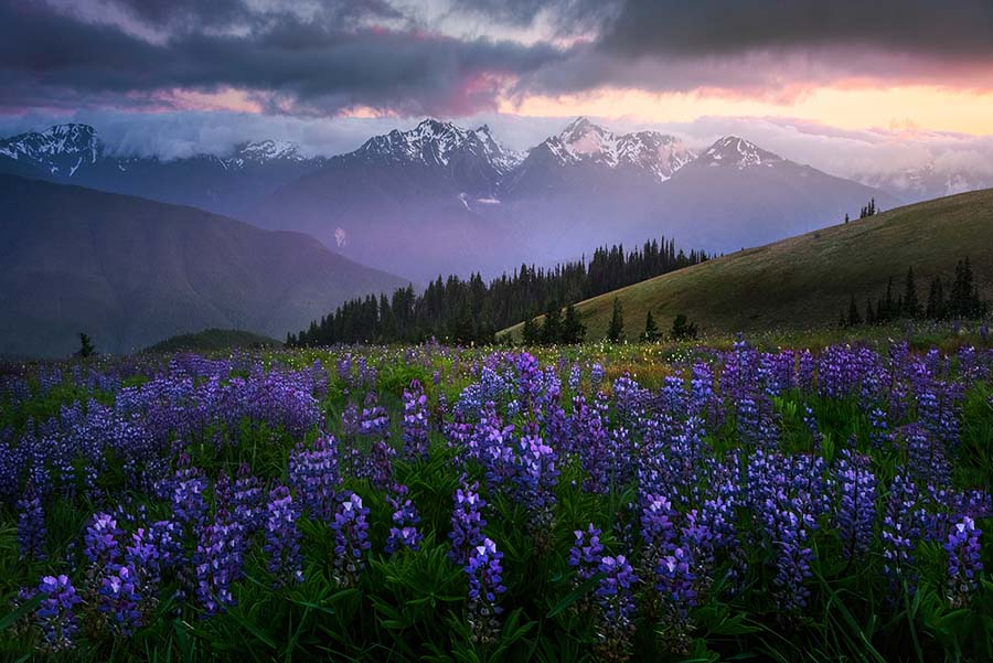 Images from Hurricane Ridge in Olympic National Park