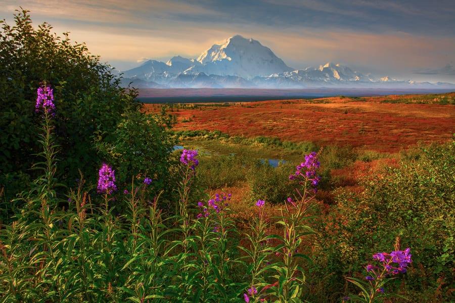Changing Seasons of Denali