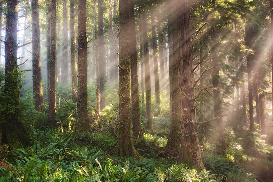 Oregon Coast Photo Workshop Photography Tours Light Rays Forest